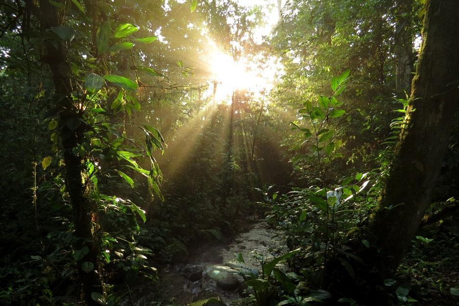 Costa Rainforest Hiking Trails